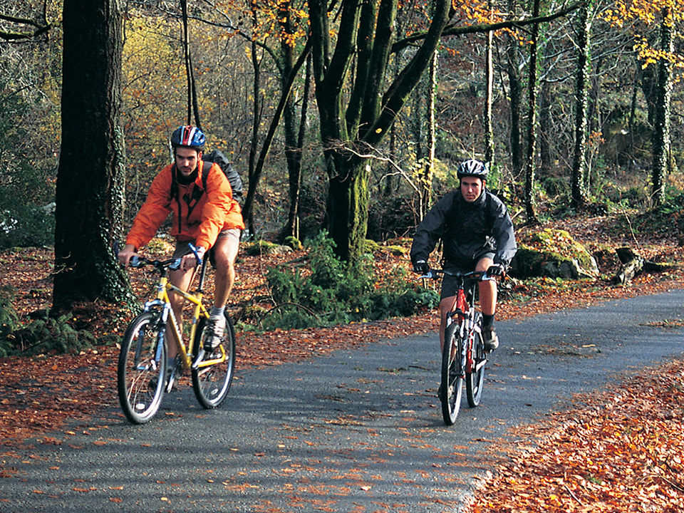 People cycling through woodland : Outdoor Cardiff